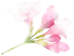 NLD Addon Flower (6) b.png
