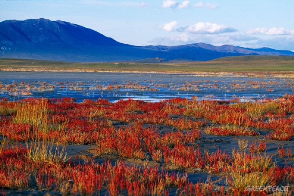 известно, цветы фото растительного мира монголии все делать