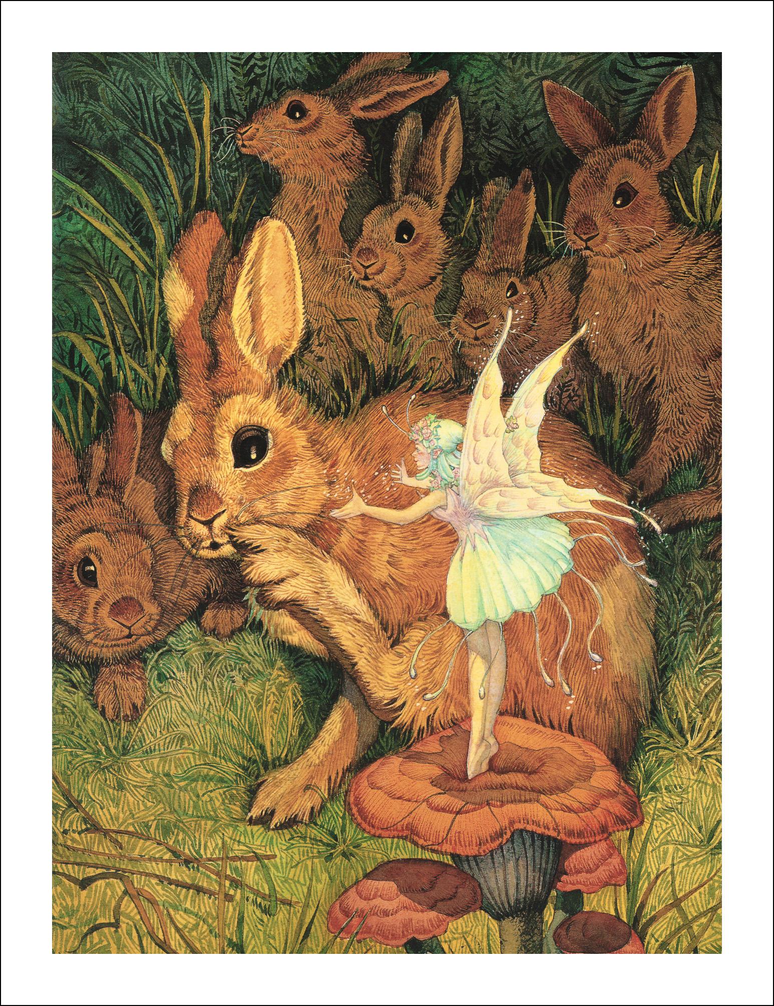 Дон Дейли, Плюшевый кролик