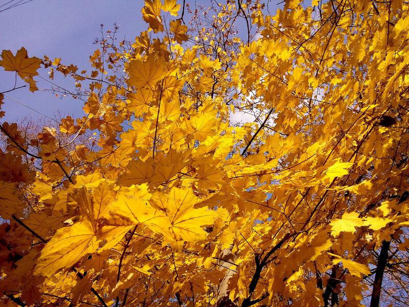 Артефакты осени-листва.jpg