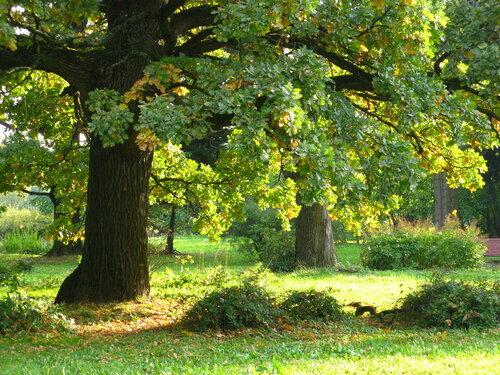 Дуб, терновник и ясень (Гимн деревьям)