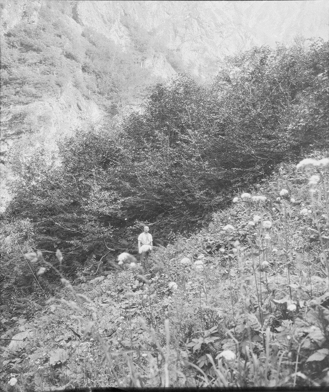 На северном склоне Начара