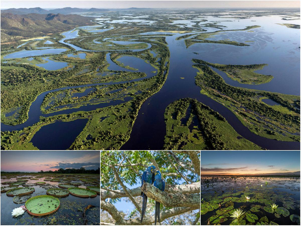 Пантанал в Бразилии: крупнейшие в мире водно-болотные угодья