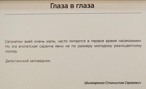 https://img-fotki.yandex.ru/get/475949/140132613.6ce/0_244477_88ff8cc5_L.jpg