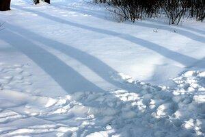 Голубые тени февраля