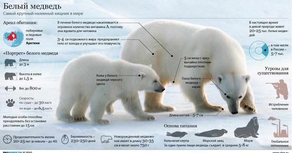 Белый медведь открытки фото рисунки картинки поздравления