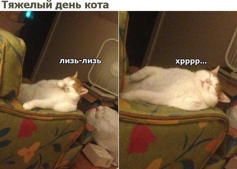 0 1801c6 32e7b68 XL - Василий, это же гифки - короткое такое видео с юмором