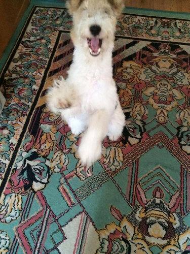 Кристофер собака в добрые руки в москве фото