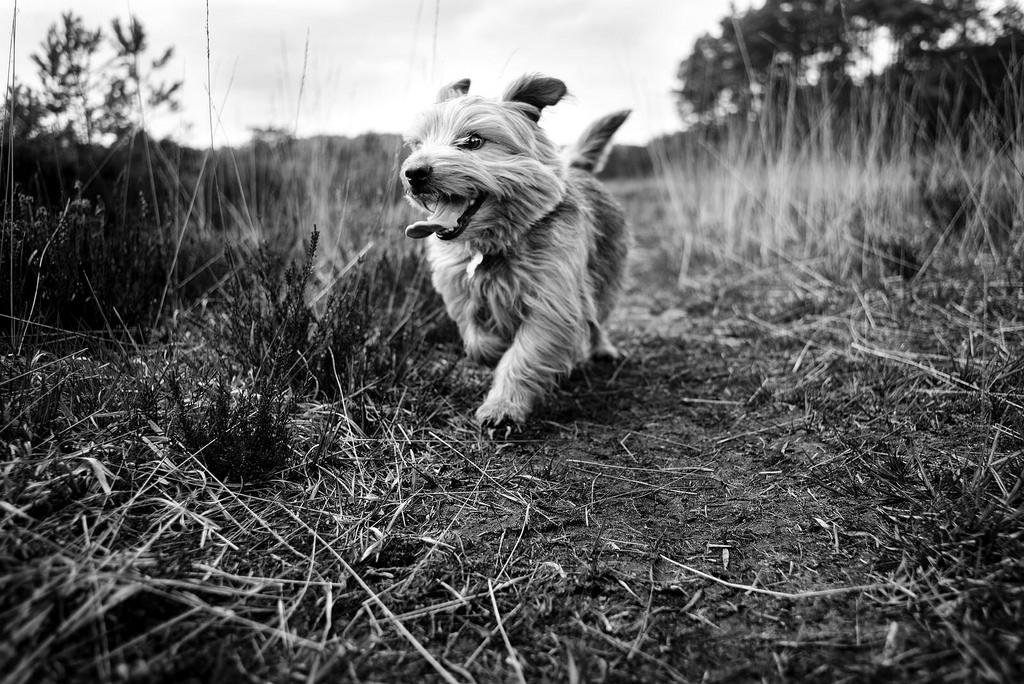 Честные собачьи глаза: британец фотографирует собак в разных странах мира (21 фото)