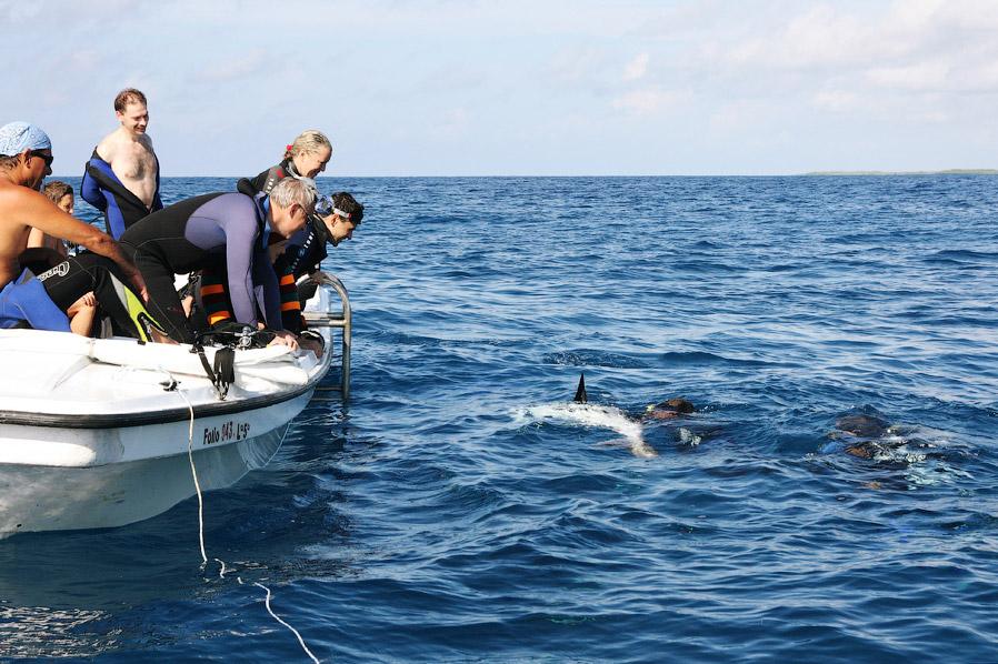 Как поймать акулу за хвост?