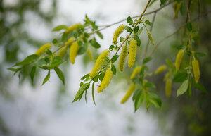 s:деревья,c:желтые