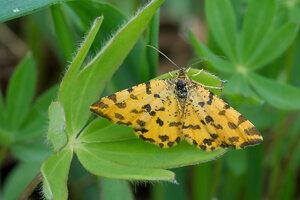 s:дневные бабочки,c:желтые