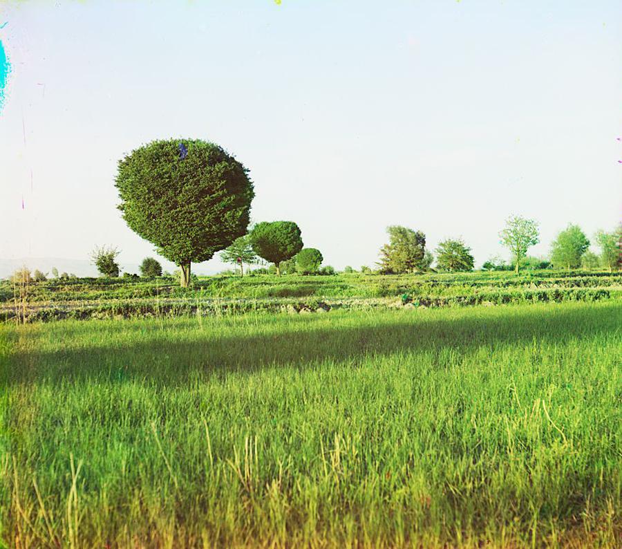 Окрестности Самарканда. Карагачи
