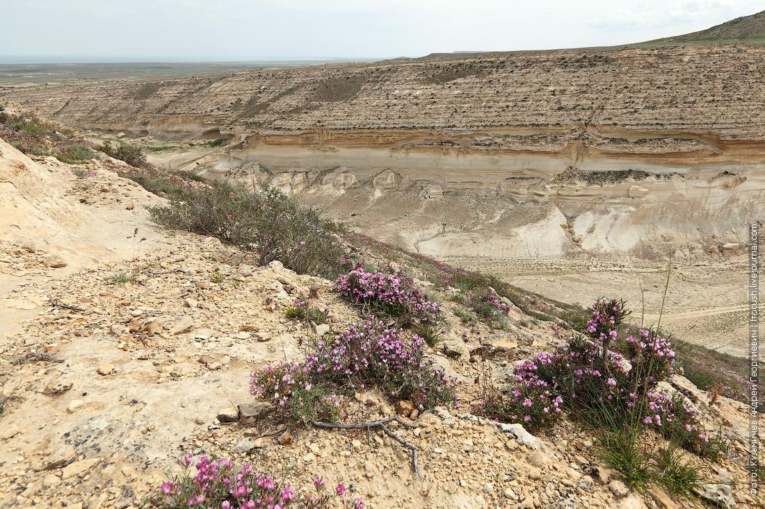 растительность каньона Капам-Сай