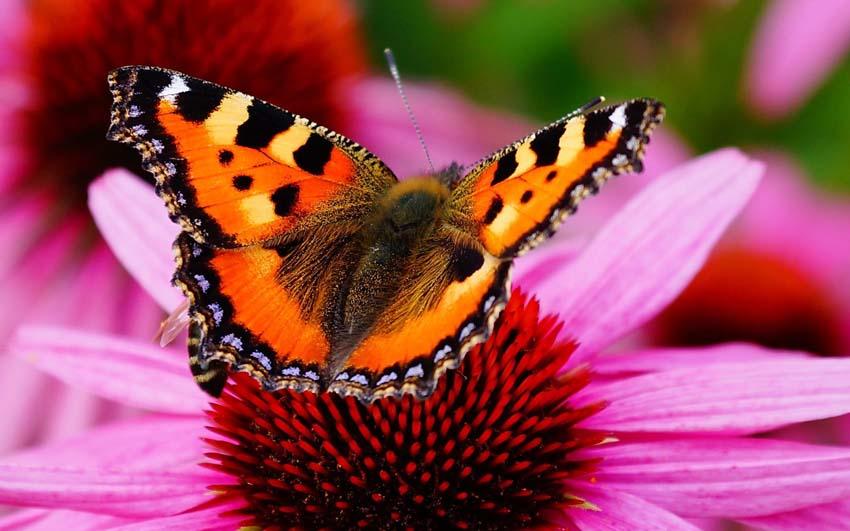 Бабочки Фото Обои рабочий стол