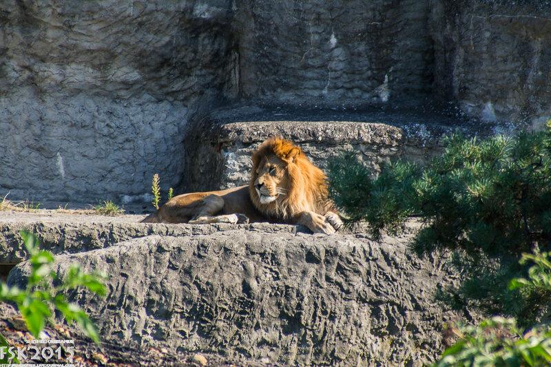 warshaw_zoo-29.jpg