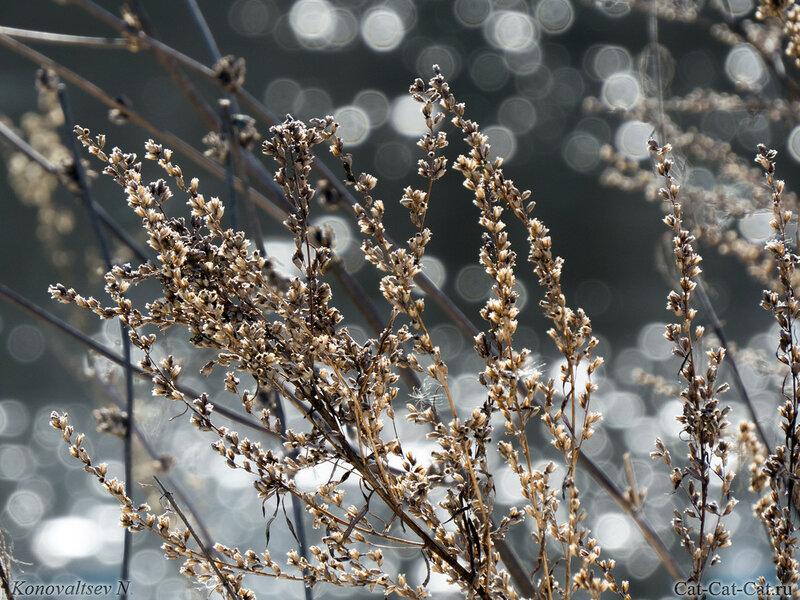 Свияга весной