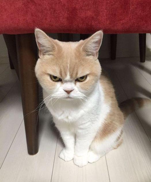 Позитивный кот
