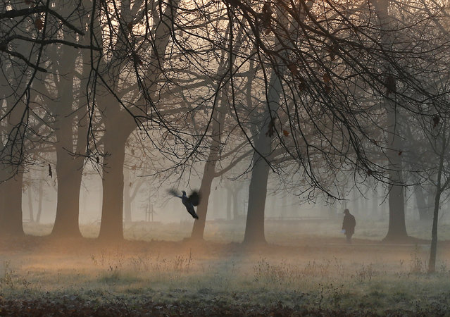 A man walks through the morning mist in a park in Rozzano, near Milan, northern Italy, Thursday, Dec