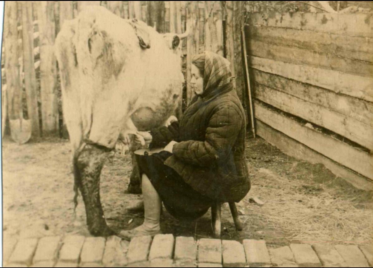 Домашняя коровка