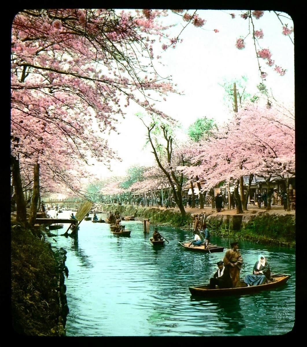 Токио. Катание на лодках по реке в Эдогаве