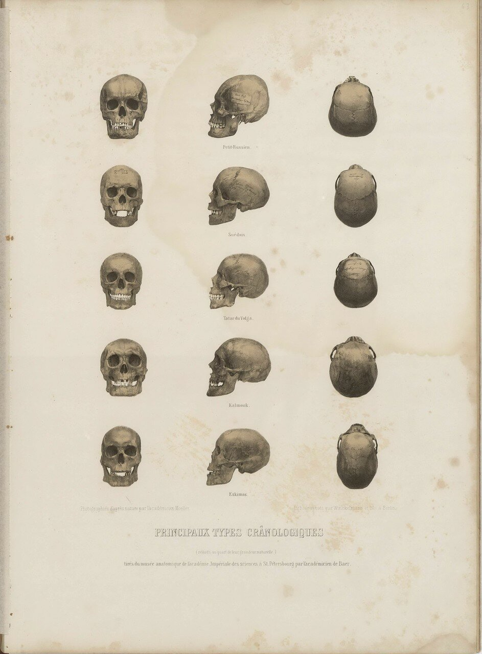 Образцы черепов
