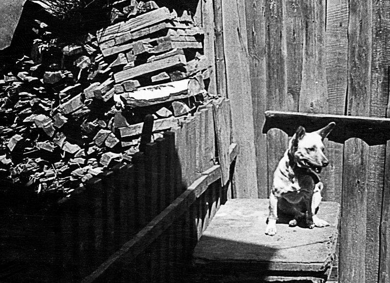 Собака по кличке Белка