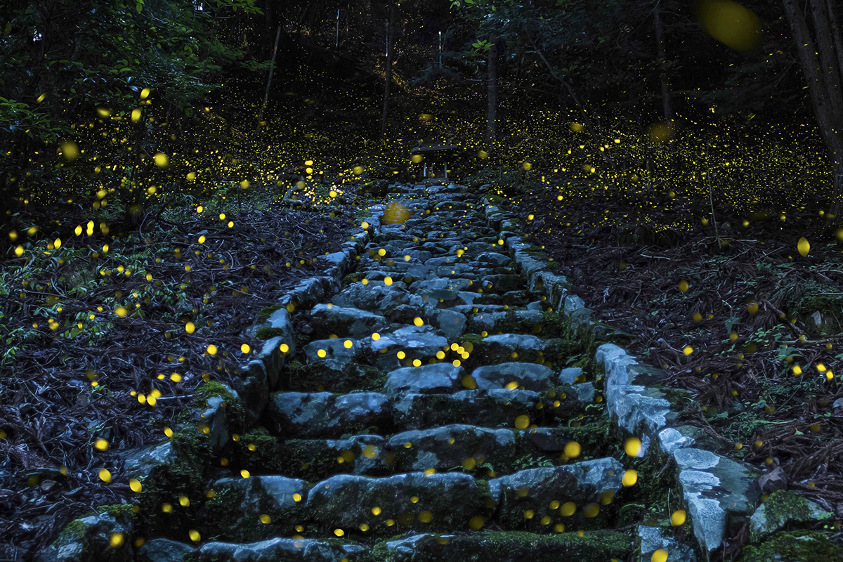 Nature, honorable mention. Photo and caption by Yutaka Takafuji . Forest of the Fairy . Shooting in