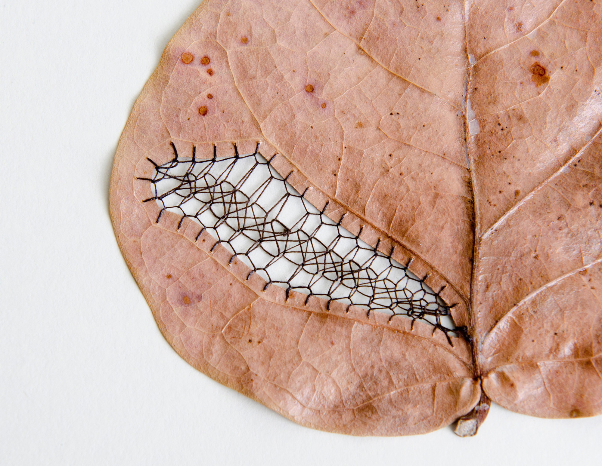 Artist  Hillary Fayle  (previously here and here ) slices and stitches patterns into found leaves, p
