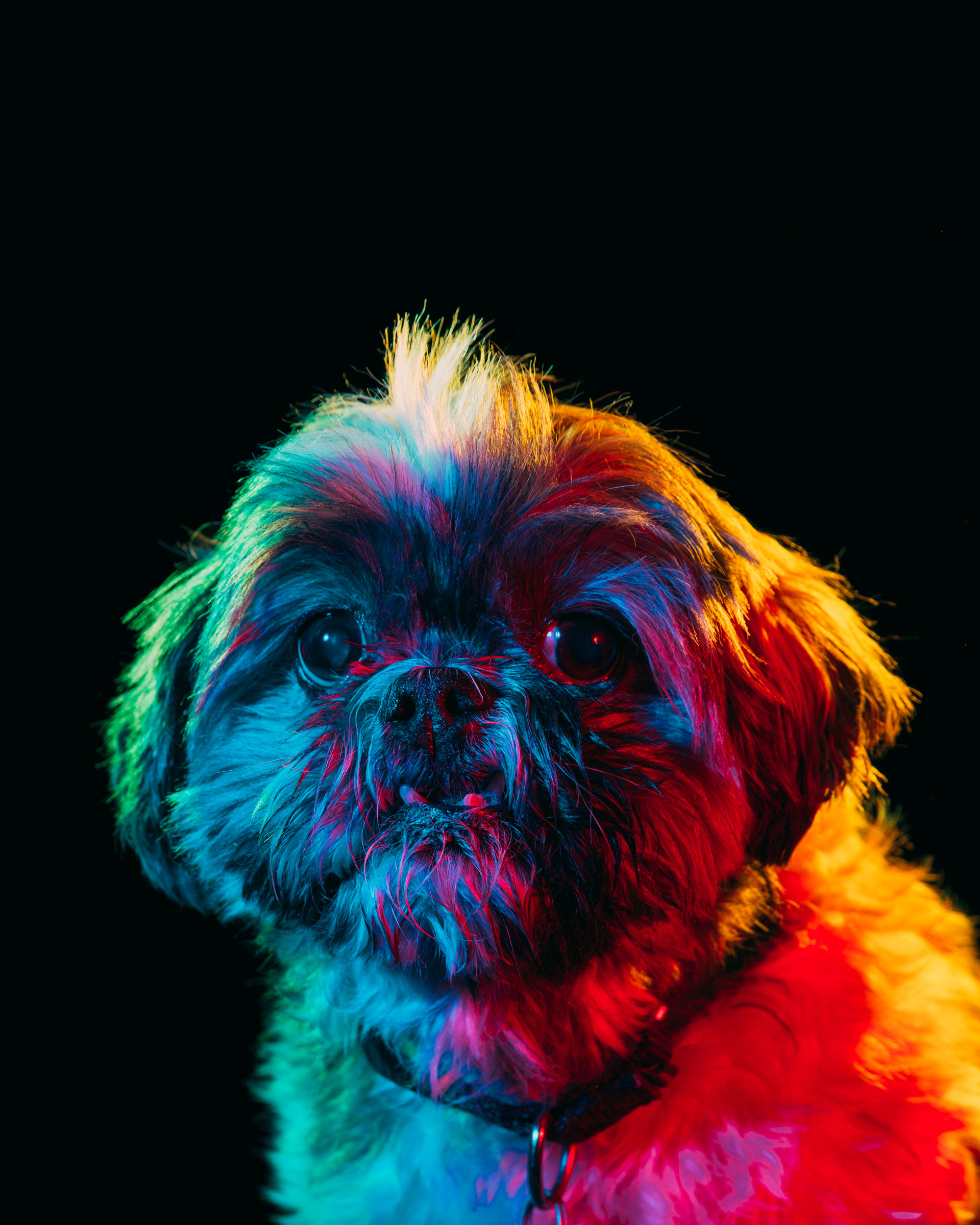 Colorful Portraits of Adoptable Dogs Photographed by Paul Octavious