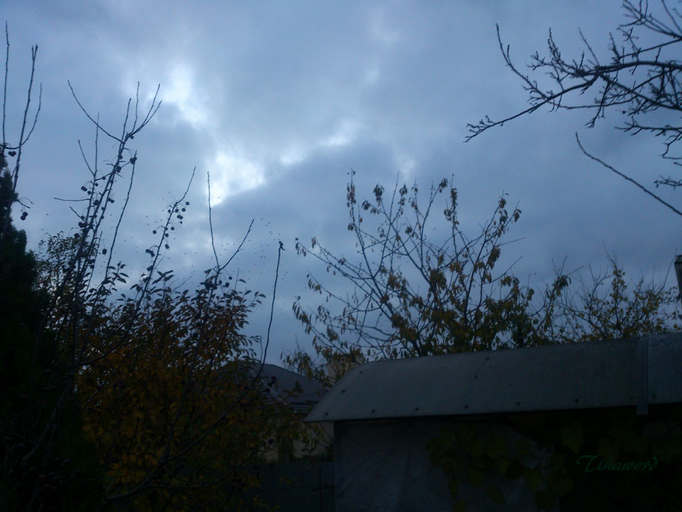 птицы--3.jpg