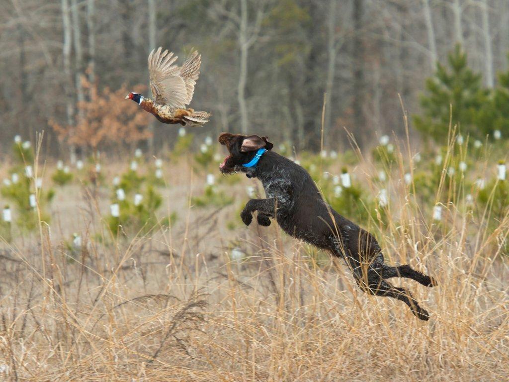 Охота на перелётах