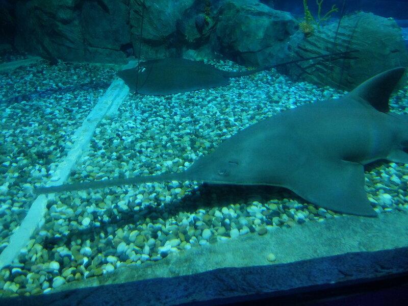 Гонконг - Oкеанический парк - Рыба-Меч
