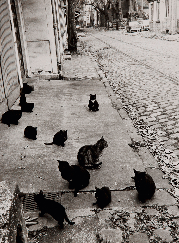 1970. Кошки в Берси