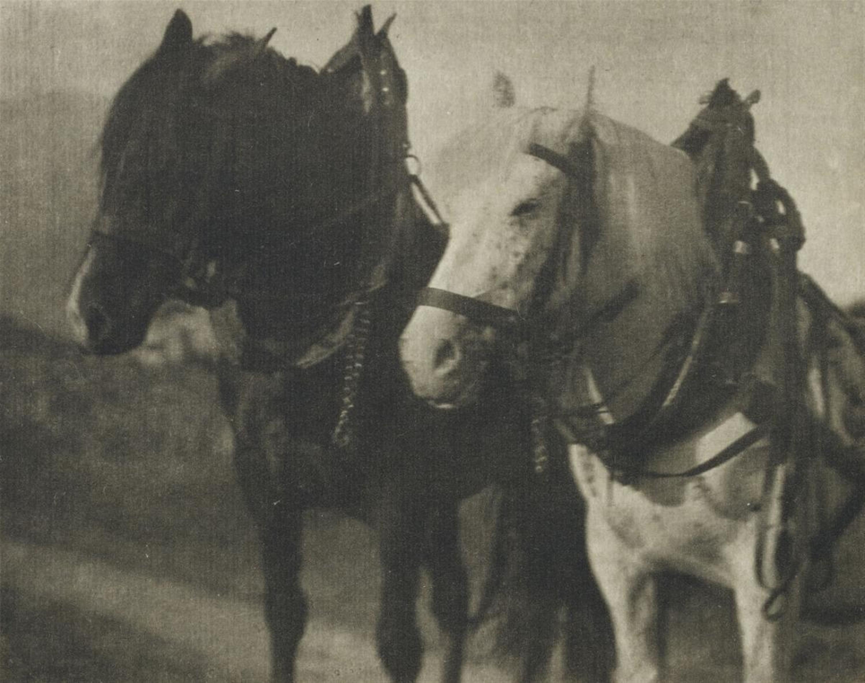 1904. Лошади