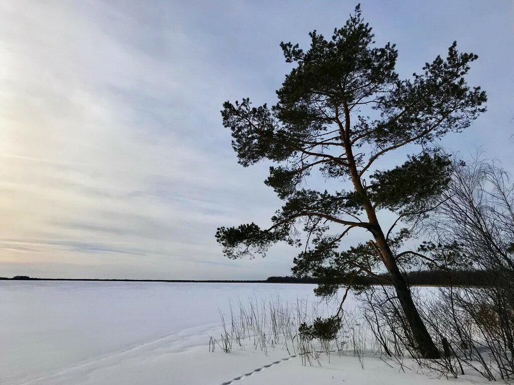 Поет зима – аукает, мохнатый лес баюкает стозвоном сосняка.