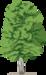 вектор дерево (18).png
