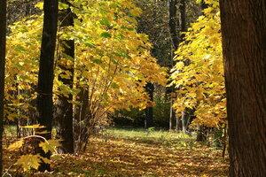 Золотые аллеи осени