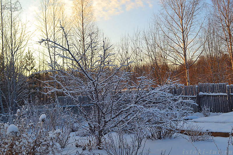 слива_по_снегом_sliva_po_snegom