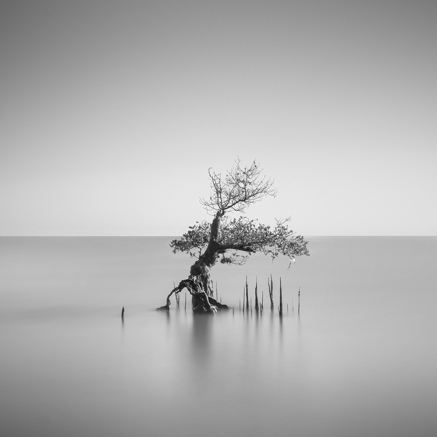 Мангровые леса / фотограф Daniel Tjongari