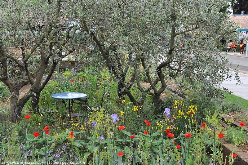 Chelsea 2015 A Perfumers Garden in Grasse.JPG