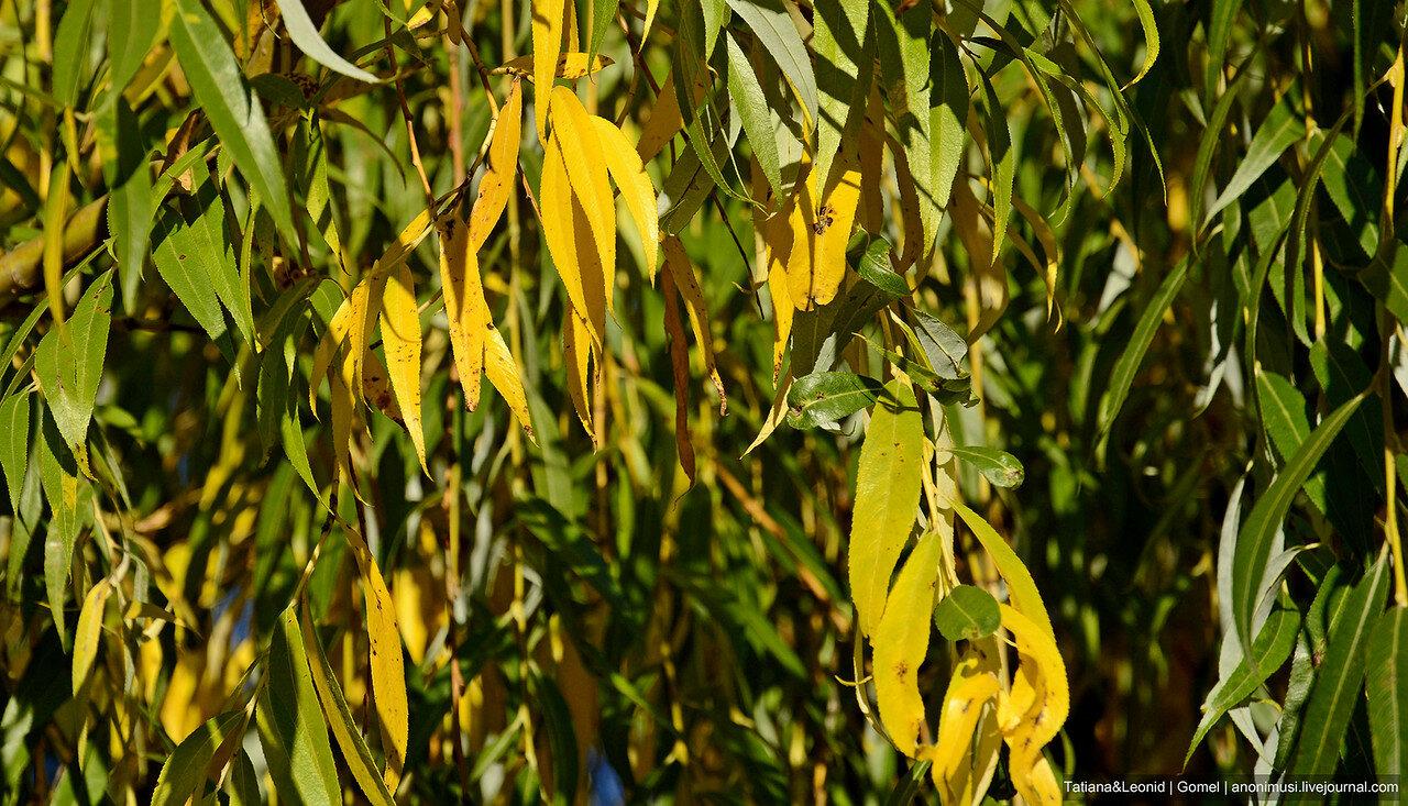 Листья жгут