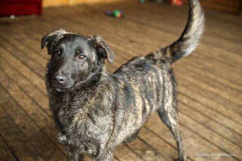 Поночка собака ищет дом в москве фото