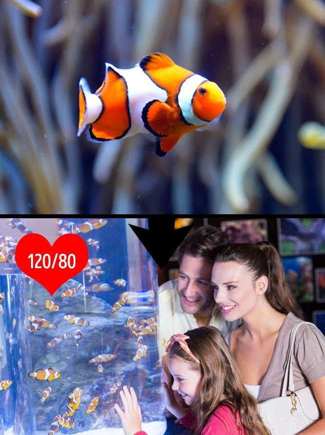 © depositphotos  © depositphotos     Аквариумные рыбки— лучшее лекарство отстресс