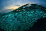 A Wave of Fish