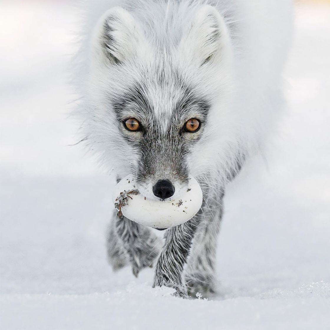 © Sergey Gorshkov / Wildlife Photographer of the Year