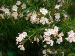Турецкие весенние цветы..JPG