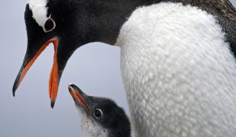 5. Архипелаг Южные Шетландские острова в Антарктиде, 24 января 2015. Ученые говорят, что Антарк