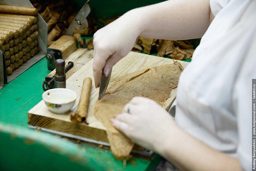 Сигара очень аккуратно оборачивается в покровный лист. На ней не должно быть складок или рван