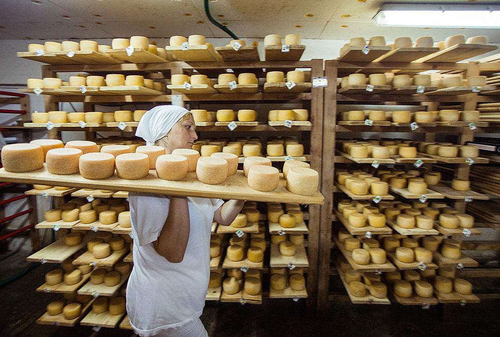 На Селиской сыроварне делают три вида сыра. Нарцисс Карпат (за основу взят сыр Грюйер), Хуст (за осн